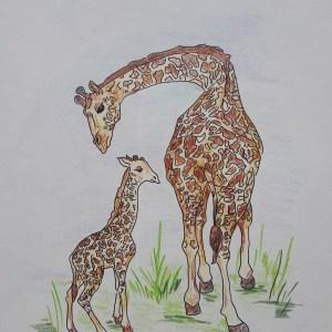 Véronique Redon – Girafe et son petit
