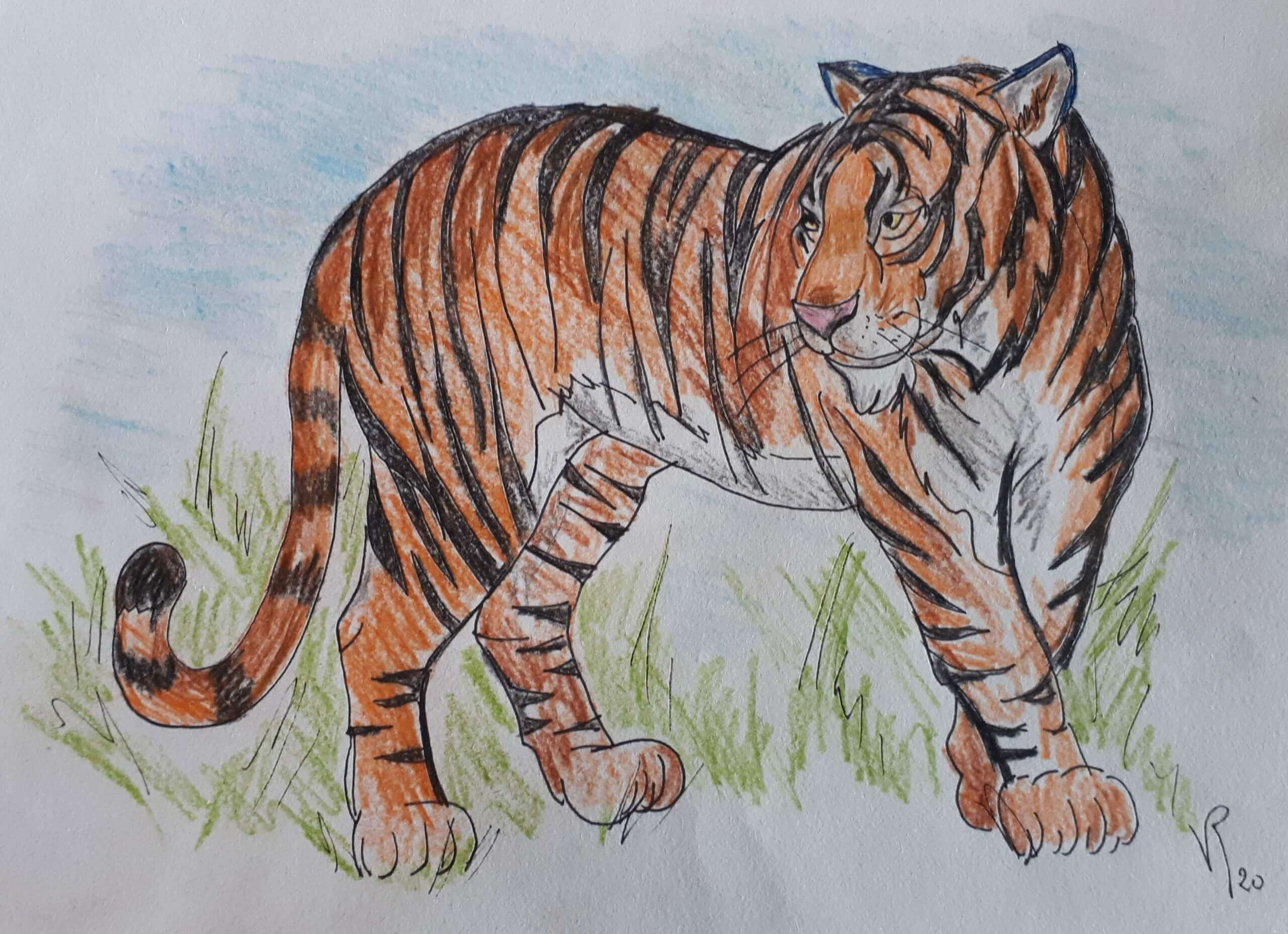 Véronique Redon - Le tigre