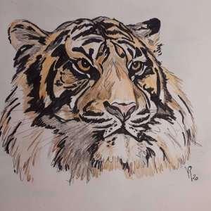 Véronique Redon – Tigre de Sumatra
