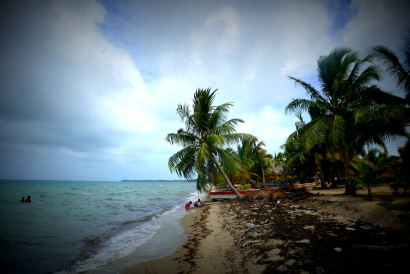 Children playing under a palm tree on the beach in Hopkins, Belize.