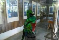 Stuffed quetzal in the Biotopo del Quetzal