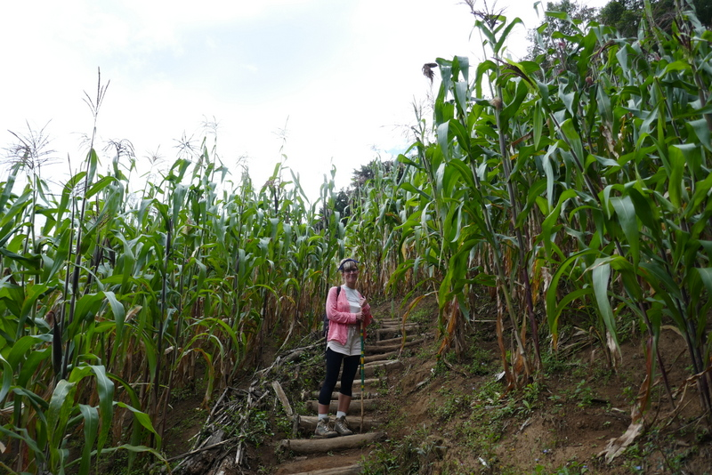 Anete in the midst of volcan San Pedro's corn fields