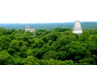 Temple I and V sticking out of the canopy at Tikal national park