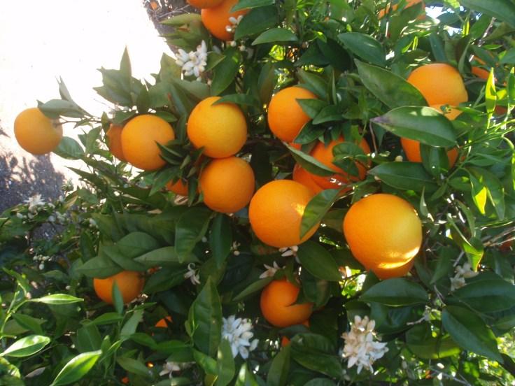 La cuna de la naranja