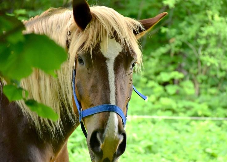 Paseo a caballo por la Albufera