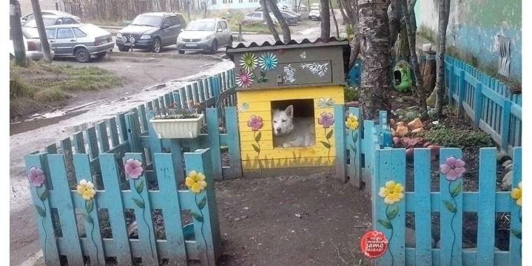 Будка для бездомного пса в Сясьстрое