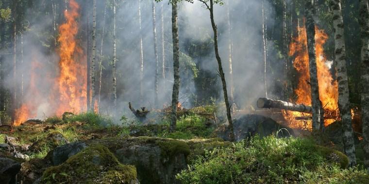 Вход в леса Ленобласти воспрещён