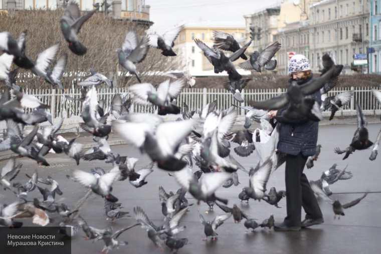 Городские птицы опасны для людей