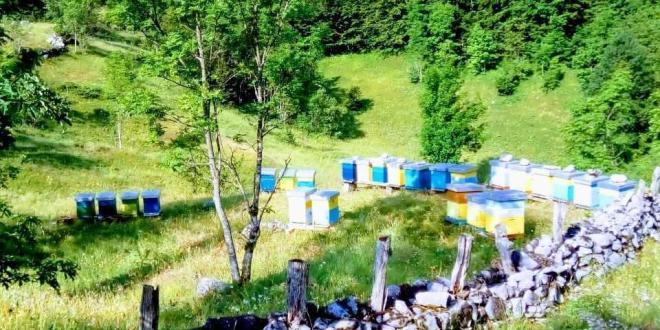 škola pčelarstva