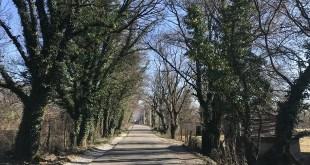 CDE: Sačuvati stabla hrasta i brijesta na putnom pravcu Spuž – Danilovgrad