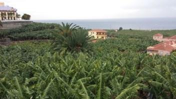 Reisebericht La Palma – Teil 5: An der Westküste…überall Bananen!