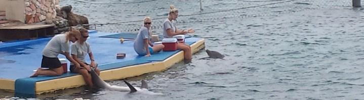 Reisebericht Curaçao – Teil 4: Delfin-Begegnung