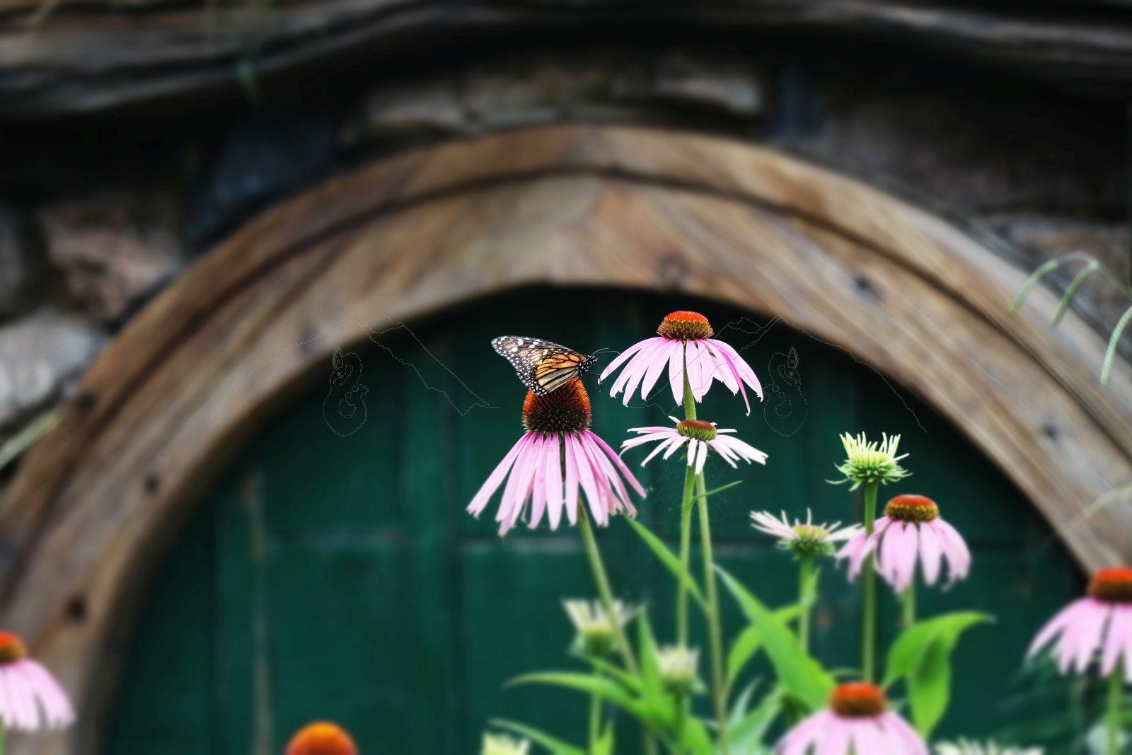 Ein Paradies für Schmetterlinge ...