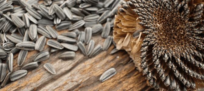 zaden ruilen : verrassing per post