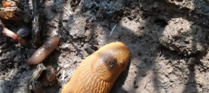 Slakken, het vervolg