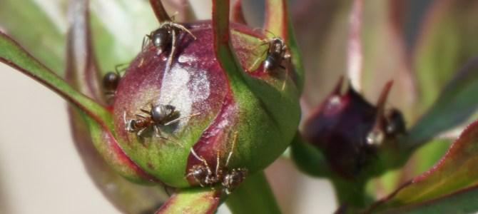 Mieren en luizen