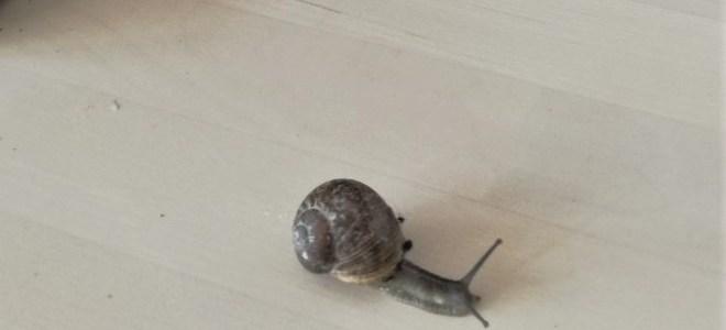 Mijn kleine slakkenverzamelaarster