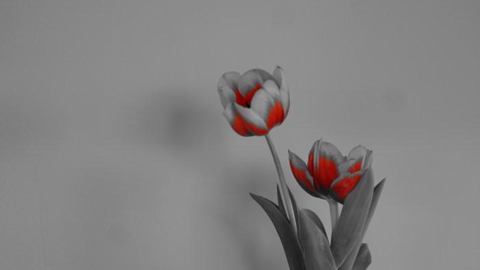 deelkleur rood