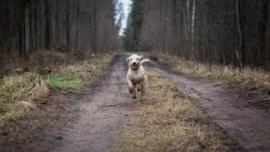 Hunde – des Läufers Leid?