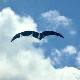 Vogelwolkenfenster