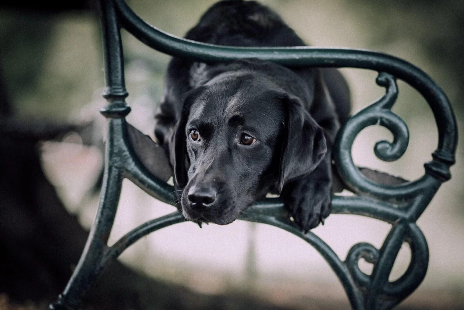 trainingspläne-im-hundetraining-erstellen-infos-anfänger-hundetrainer