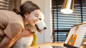 hund-trotz-berufstaetigkeit-job-arbeit-buero-hunde-adoptieren-kaufen-tipps
