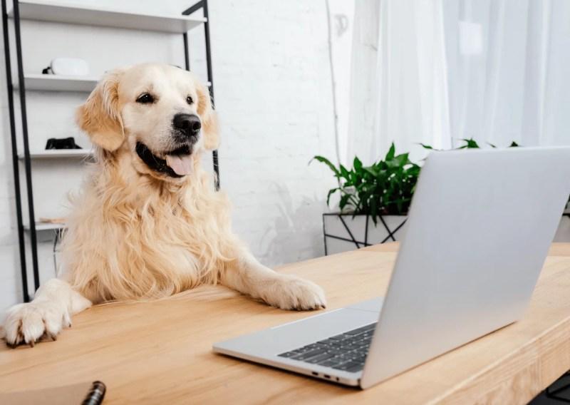 work-dog-balance-online-kurs-hund-hunde.5
