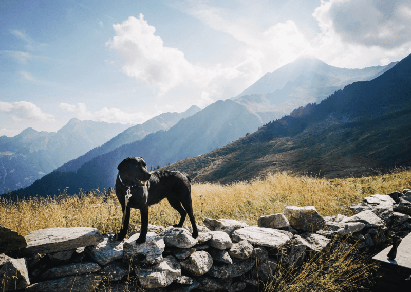 work-dog-balance-online-kurs-hund-hunde.6