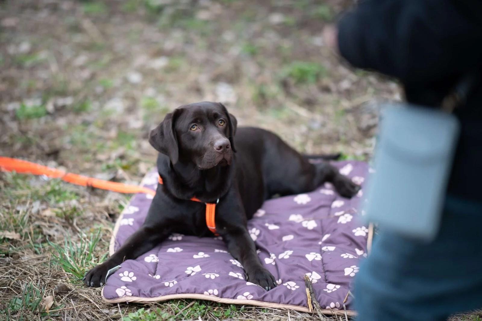 entspannter-alltag-mit-hund-5-uebungen-tipps-vollzeit4beiner