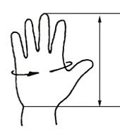 obseg-dlani