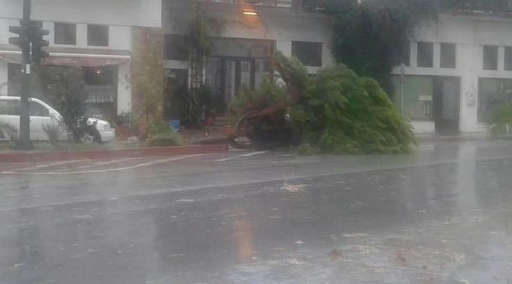 Η κακοκαρία έριξε δέντρα στην Αγριά! Ευτυχώς δεν είχαμε θύματα!