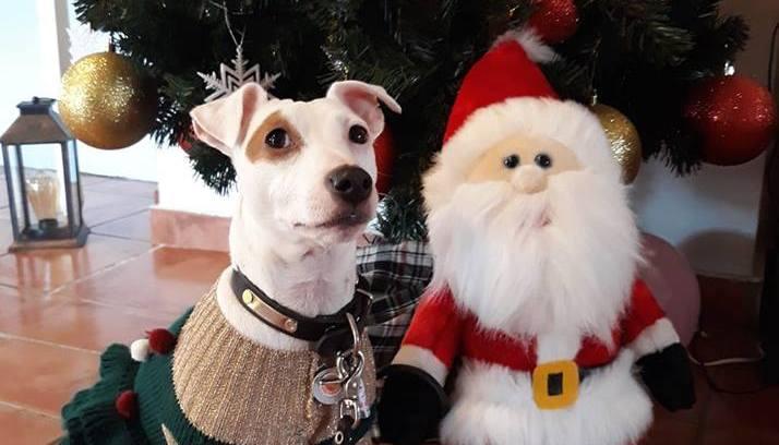 Η Μελίνα ως χριστουγεννιάτικο δέντρο σας υποδέχεται στο ξενοδοχείο Ρήγας!
