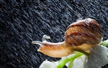 Cargol sota la Pluja… com dir-ho ? (1 sur 1)