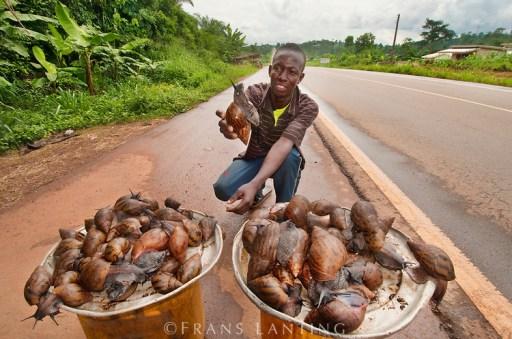 Cargols aAfrica