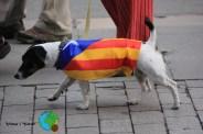 Diada Nacional de Catalunya 2013 - 20-imp