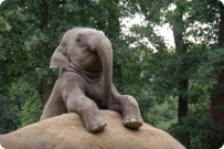 Elefant content 14