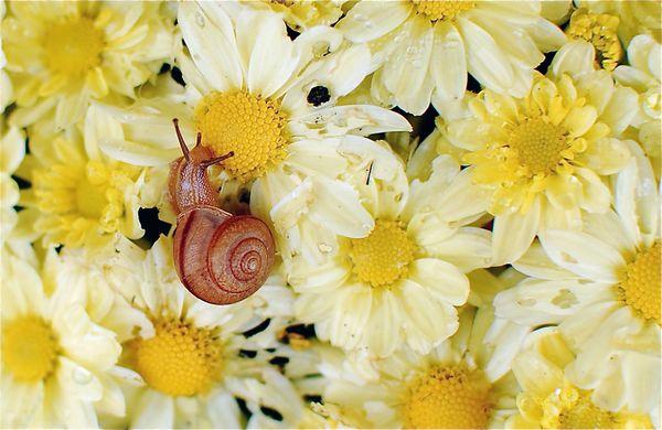 Cargol i primavera