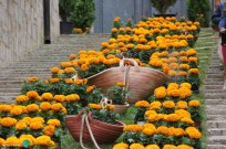 Girona - Temps de Flors 2014 zzr-imp