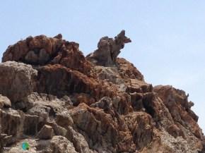 Paratge de Tudela - Cap de Creus m1-imp