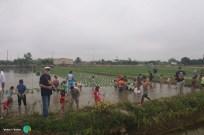 Plantada de l'arros - Poble Nou del Delta - 08 juny 2014 g1-imp