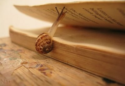 Poesia i cargol