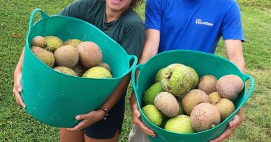 kauai-agroforestry-breadfruit