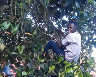 Uncle in the tree