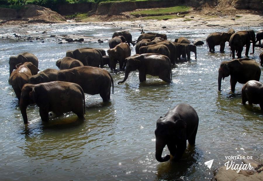 Sri Lanka - Orfanato de Elefantes em Pinnawala