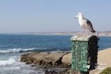o-que-fazer-em-san-diego-gaivota