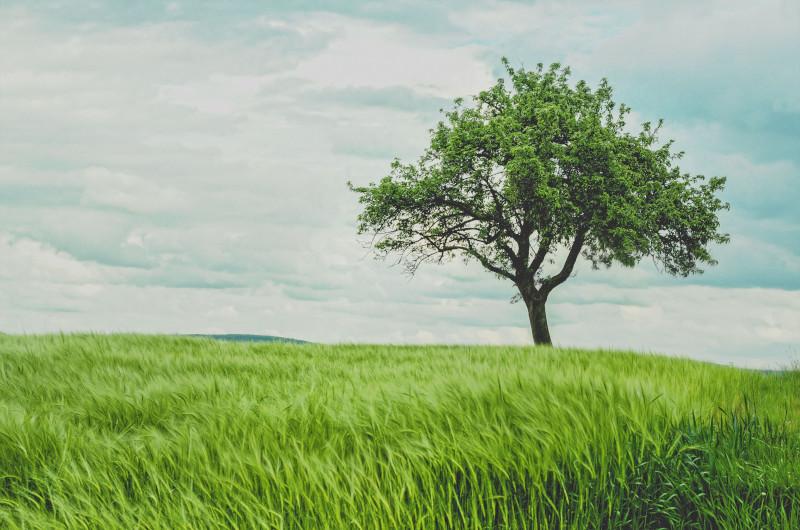 Treedom Erfahrung Bäume kaufen und verschenken