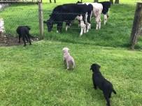Kühe sind besonders interessant!