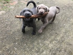 Bacchus und Bea