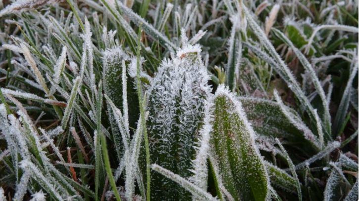 Vorst op komst: bescherm kwetsbare plantjes
