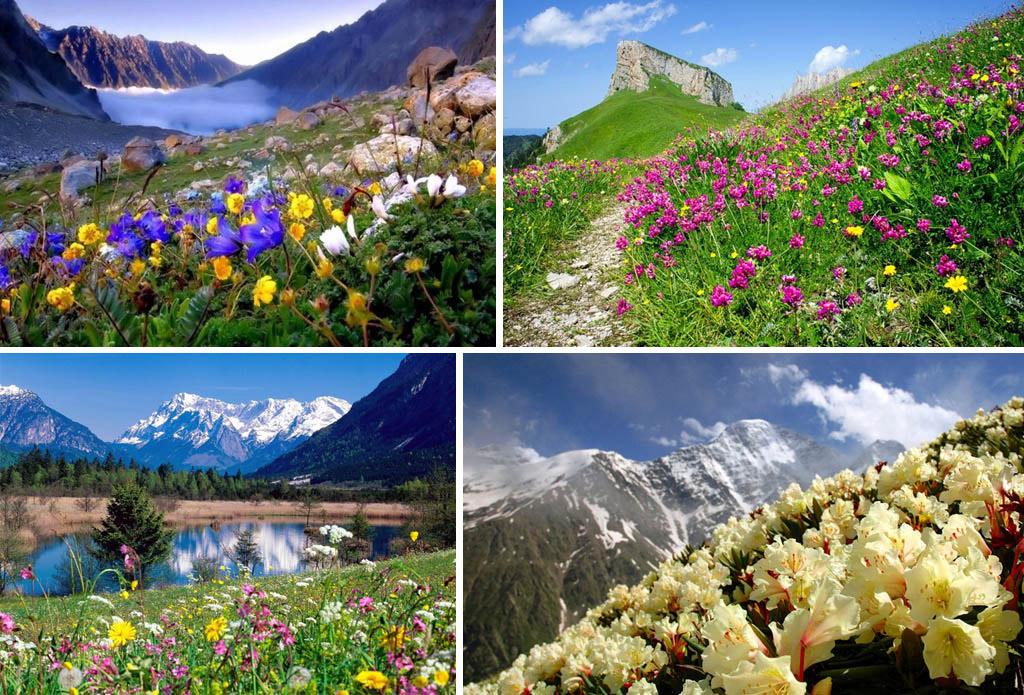 all named varieties garden ready 5cm plants alpine 6 x Saxifaga rockery mix